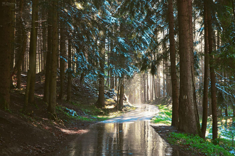 Spring morning. Morning in the forest in anticipation of spring royalty free stock images