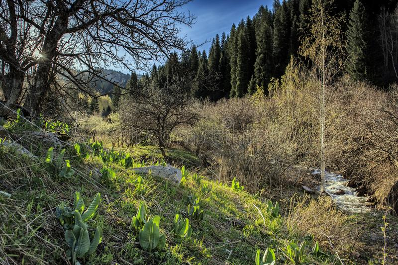 Spring in a mountain forest. stock photos