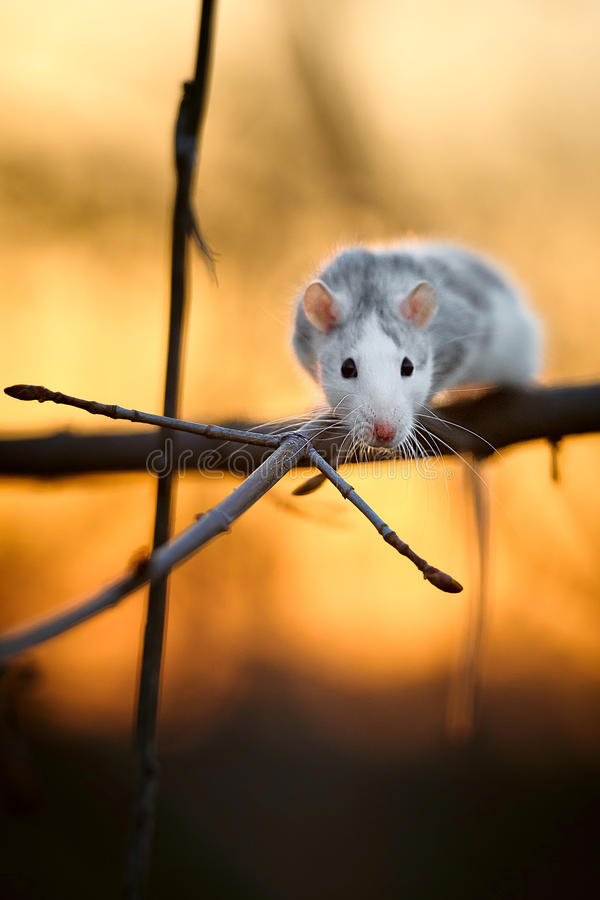 Spring mouse. On a branch stock images
