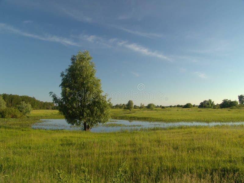Download Spring nature stock image. Image of lake, water, nature - 502955