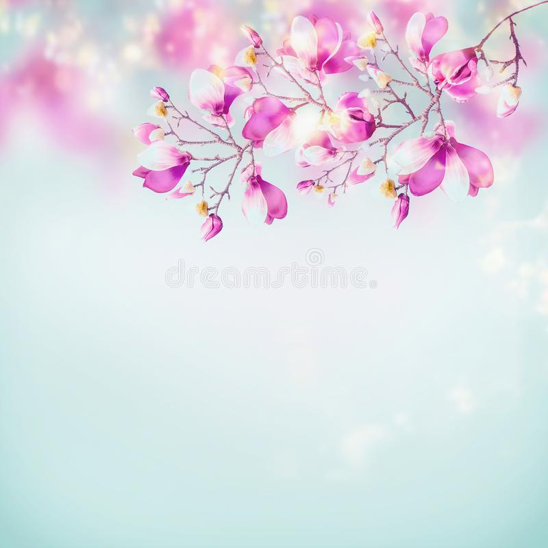 Spring nature background with beautiful magnolia blooming branches at light blue sky background with sunlight bokeh frame. Pink royalty free stock photo