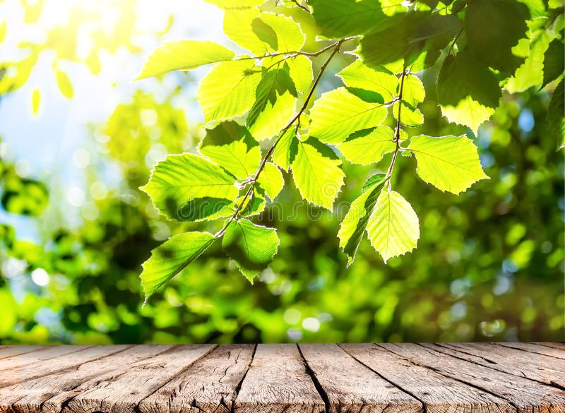 Spring nature background with green trees foliage and wooden table top stock photo