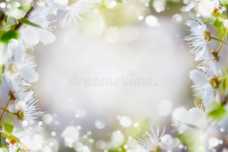 Spring nature background. Springtime cherry blossom with green leaves with sun light and bokeh stock photo
