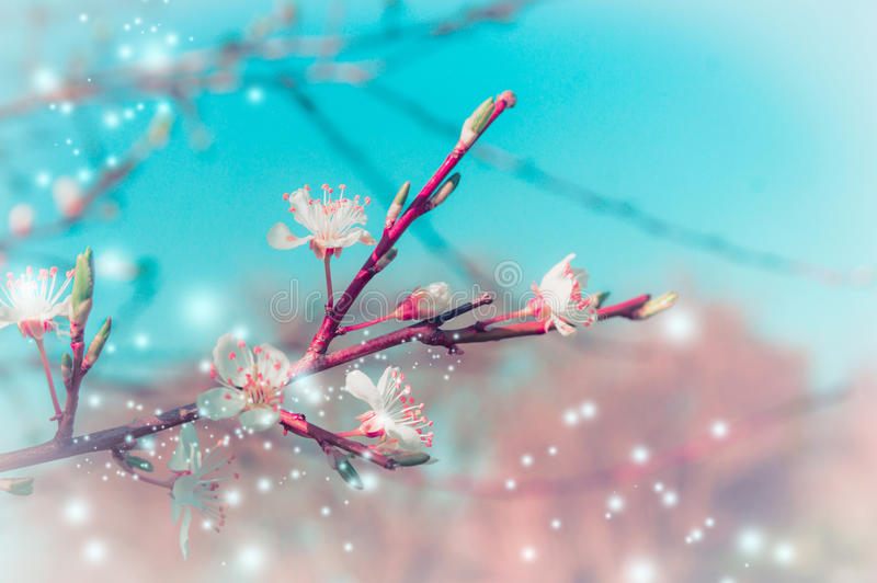 Spring nature background with tree blossom branches in park or garden stock image