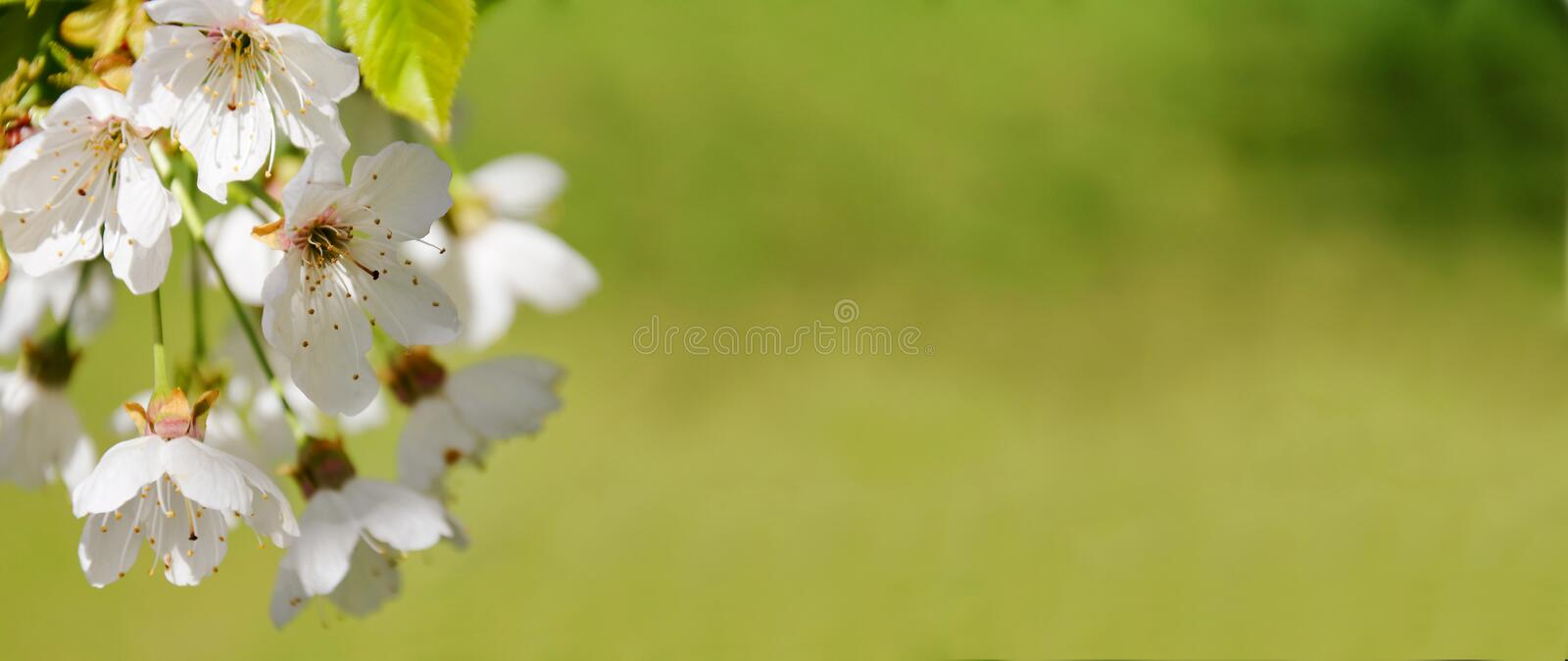 Spring nature blossom web banner royalty free stock images