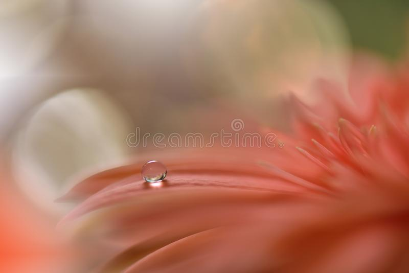 Spring nature blossom web banner or header.Abstract macro photo.Artistic Background.Fantasy design.Colorful Wallpaper.Artwork,Drop. Incredibly beautiful Nature stock photo