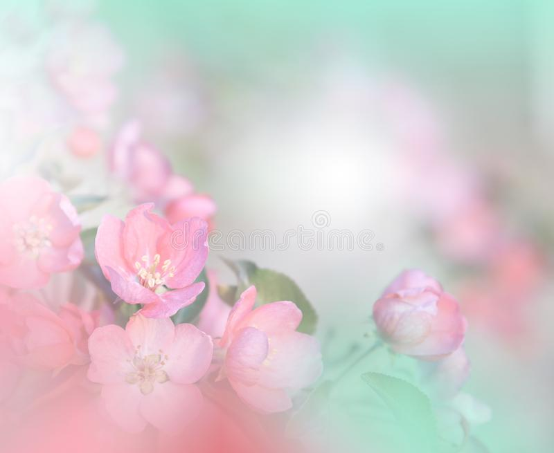 Spring nature blossom web banner or header.Abstract macro photo.Artistic Background.Fantasy design.Colorful Wallpaper.Nature. stock images