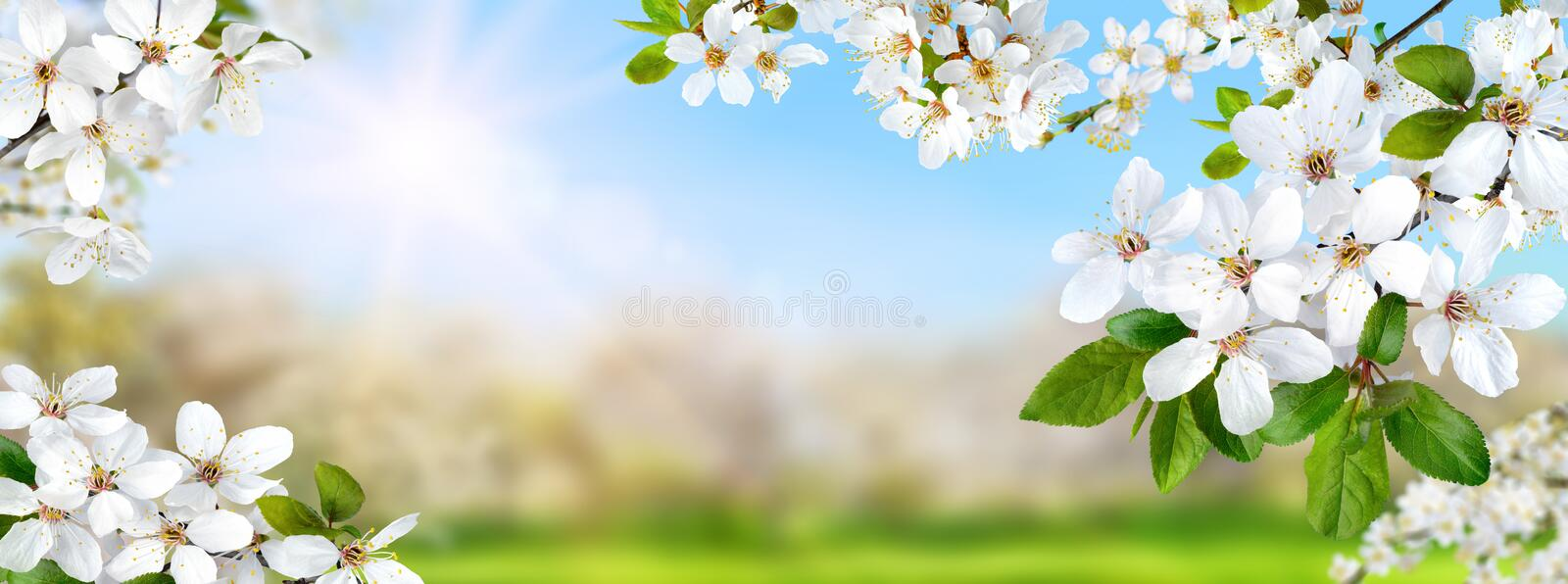 Spring nature composite with white blossoms royalty free stock image