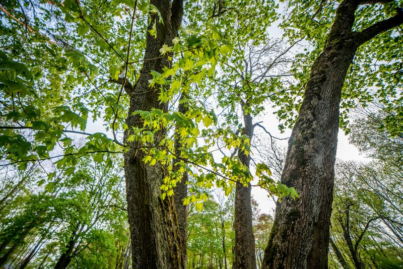 Spring nature in forest stock photos