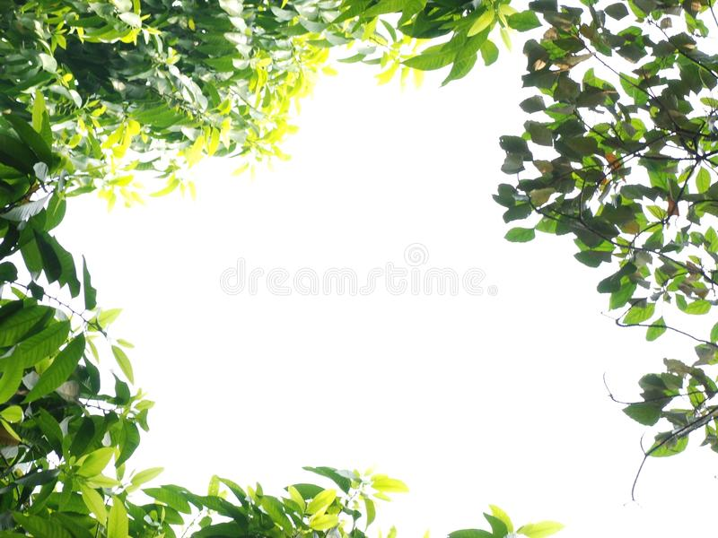 Spring nature frame stock image. Image of clean, closeup - 13570301