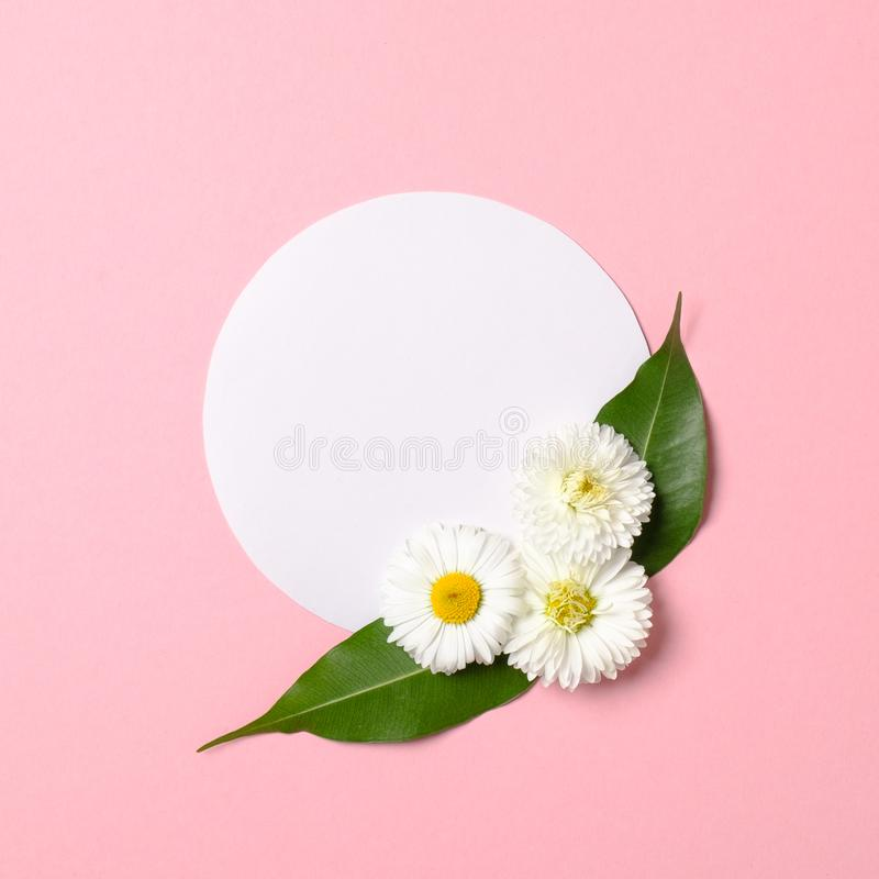Spring nature minimal concept. Daisy flowers with green leaves and white circle-shaped paper card on pastel pink background. Flat stock photo