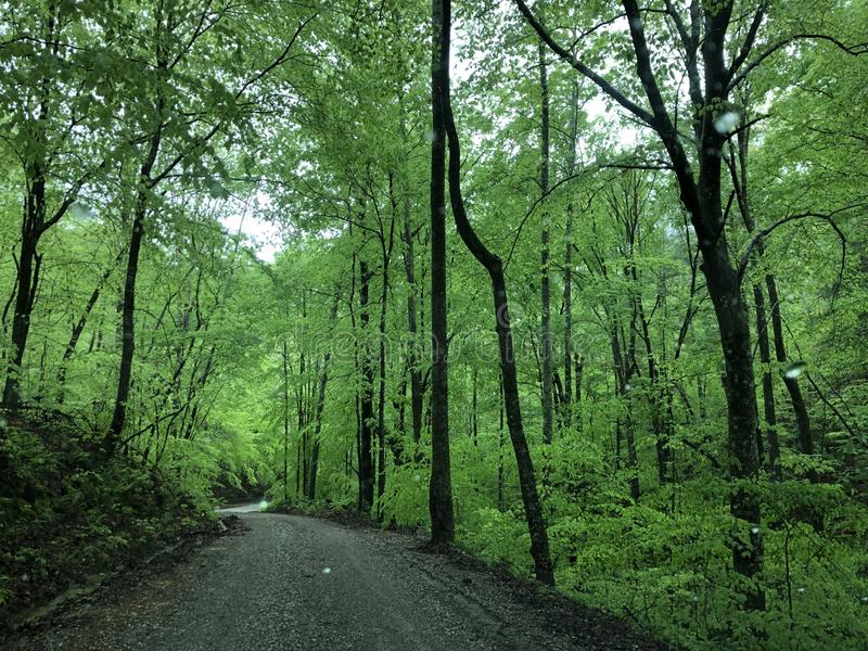 Country lane in the Appalachians. Spring and new green leaves on a country lane in the Appalachians royalty free stock photography