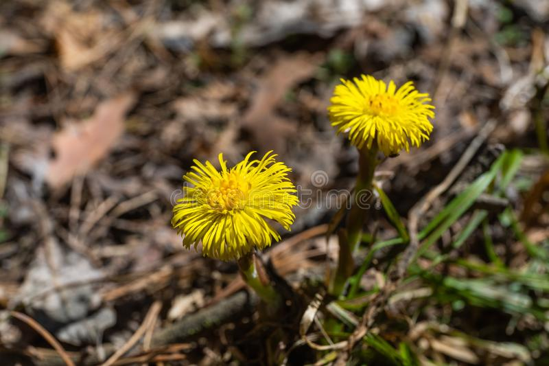 In the spring, a new life begins in nature, buds open and flowers bloom.  royalty free stock photography