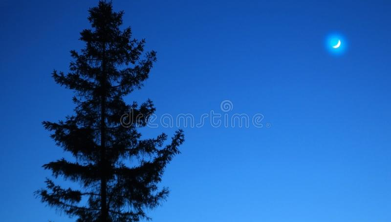 Landscape, tree against the night sky. Nature night Park outdoors.Moon on blue night sky. Spring night sky with tree and moon royalty free stock photo