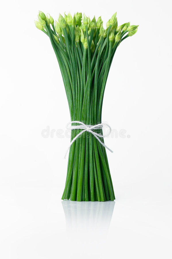 Free Spring Onion Stock Image - 3510181