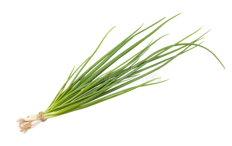 Spring onion. Isolated on white royalty free stock image