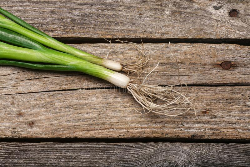 Spring onion on the table. Green fresh spring onion on the vintage wooden table royalty free stock photo