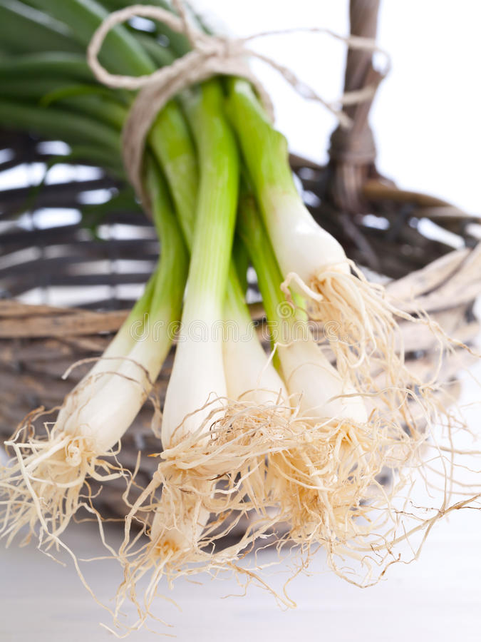 Download Spring onions stock image. Image of healthy, bulb, herb - 25703519
