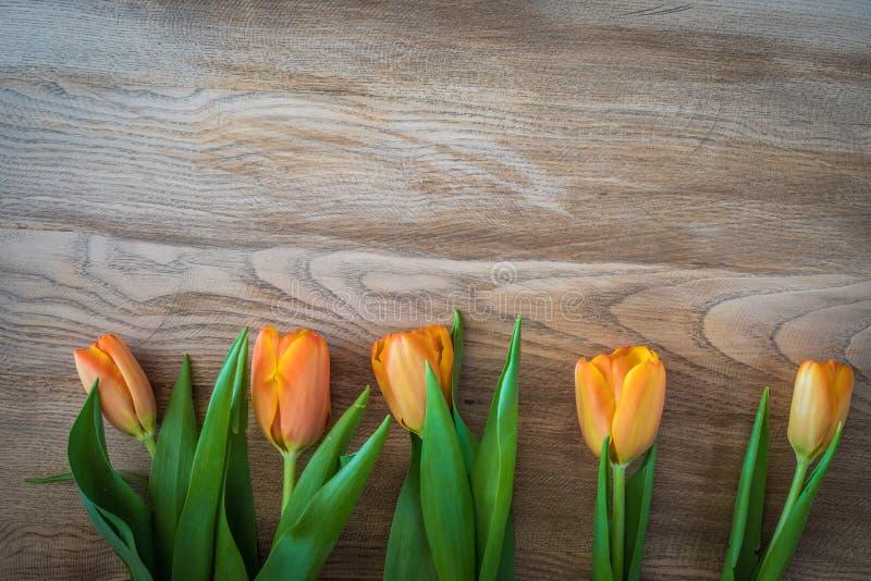 Spring orange tulips on a vintage wood background. stock image