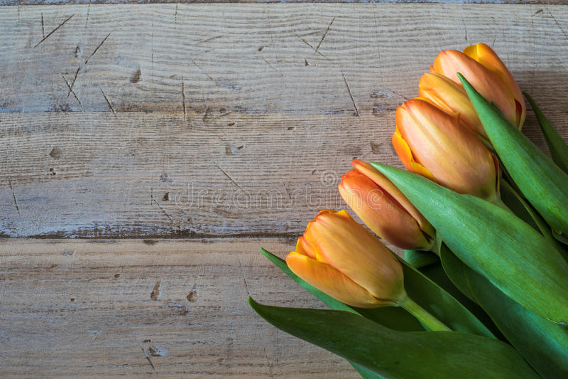 Spring orange tulips on a vintage wood background. stock photos