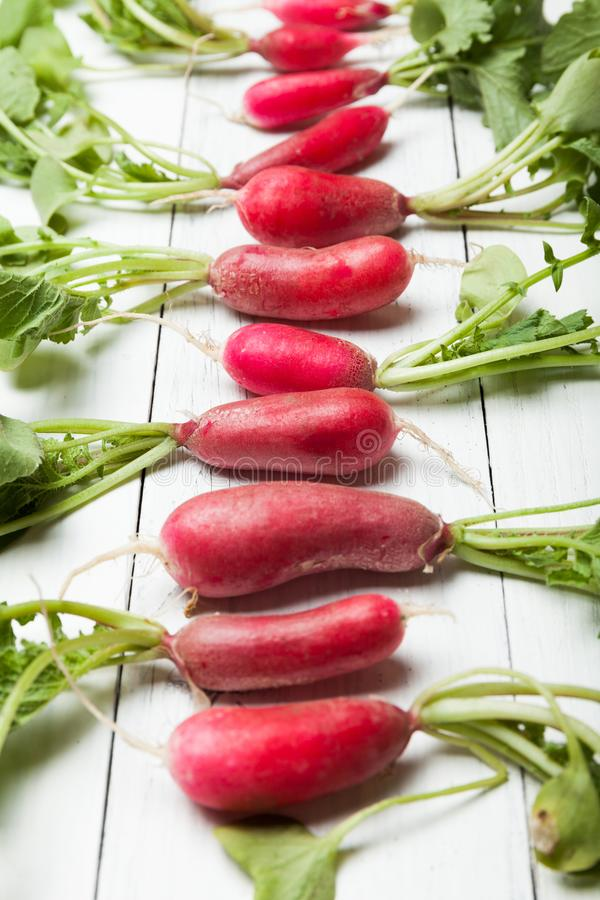 Spring organic vegan radish, root salad plant royalty free stock images