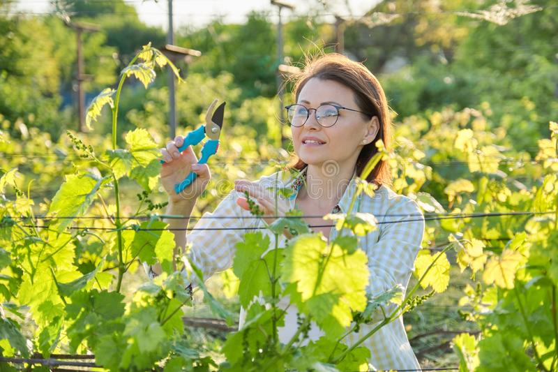 Spring outdoor portrait of mature woman working in vineyard royalty free stock photography