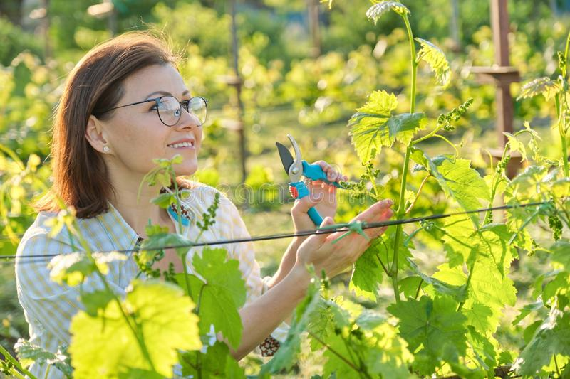 Spring outdoor portrait of mature woman working in vineyard stock images