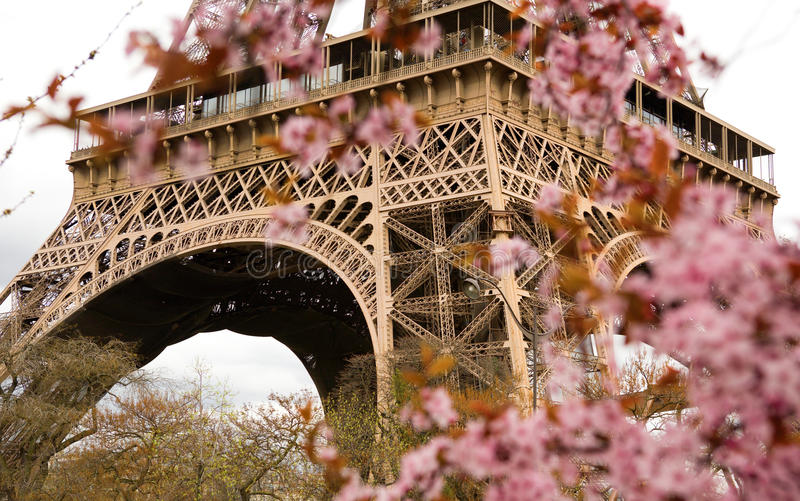 Spring in Paris. Bloomy cherry tree and the Eiffel Tower. Focus on the Eiffel Tower stock photography