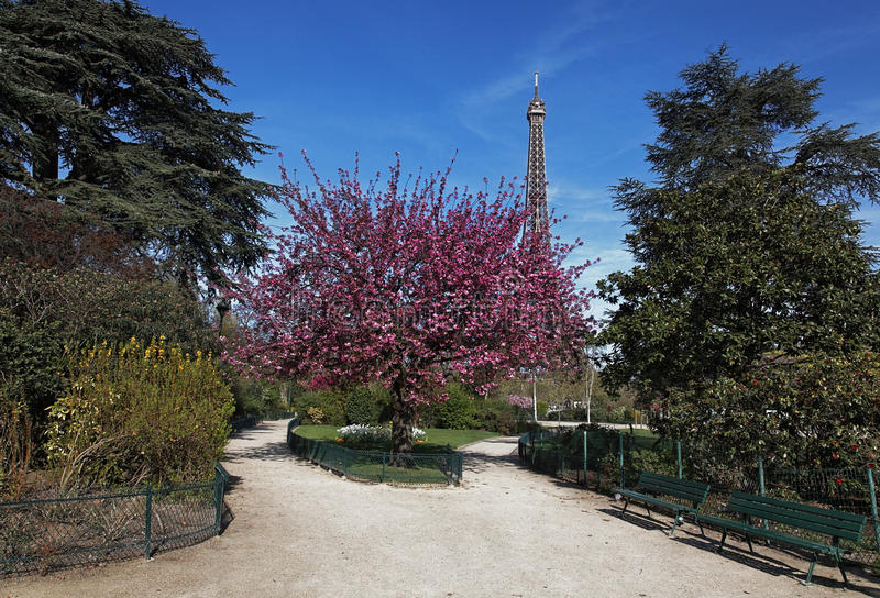 Download Spring in Paris stock photo. Image of flowers, france - 24220714