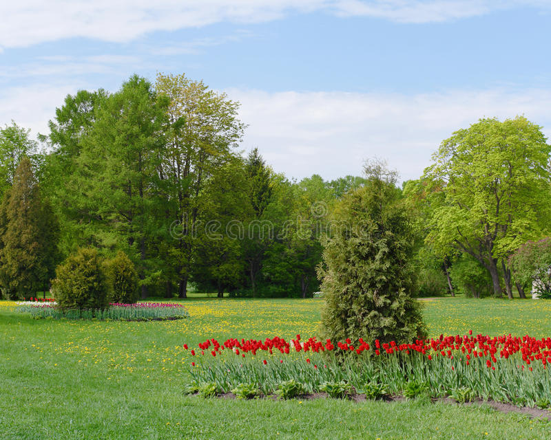Spring park. With tulip flowerbed stock photo