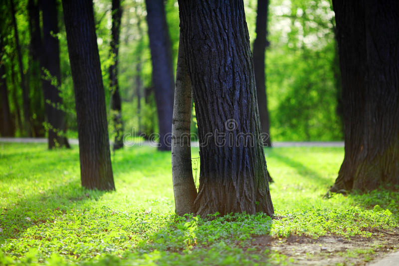 Spring Park. Beautiful nature background stock photo