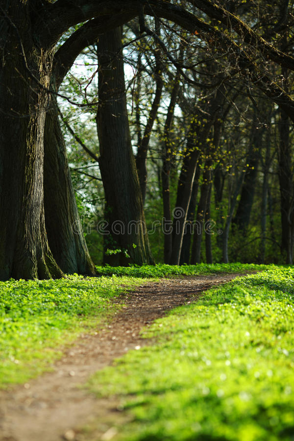 Spring Park. Nature beautiful background royalty free stock image