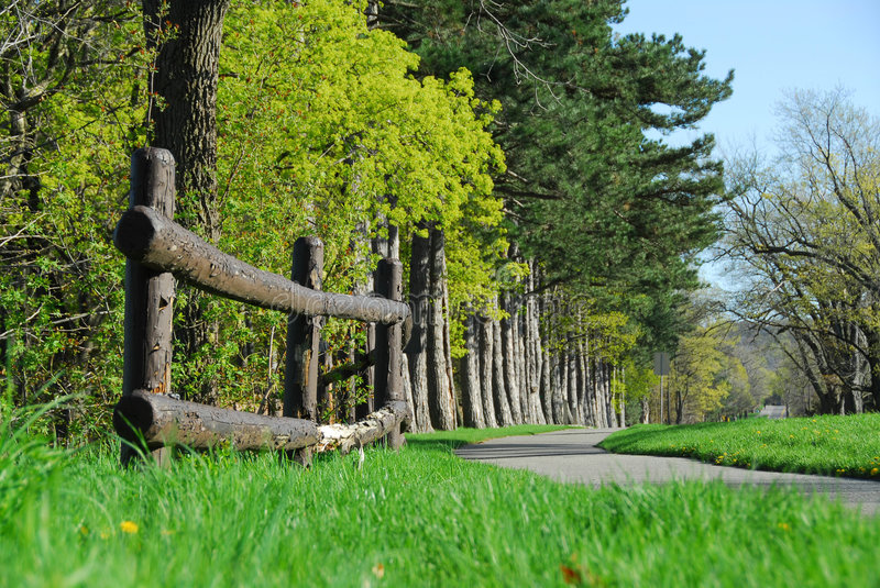 Spring in a park. Spring park with cycling path royalty free stock images