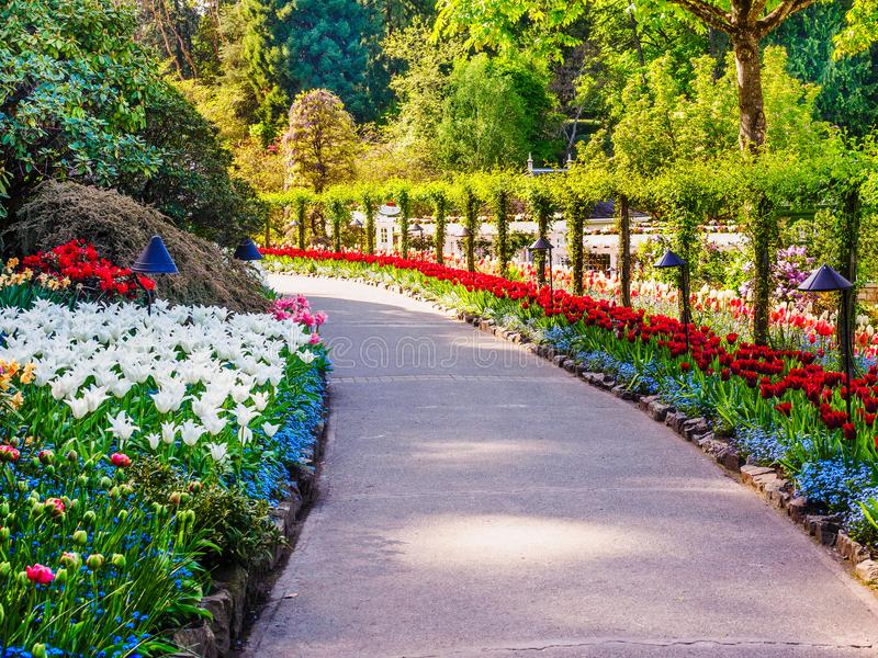 Spring park. Blossoming springtime flowers in the spring park, sunny day stock photo