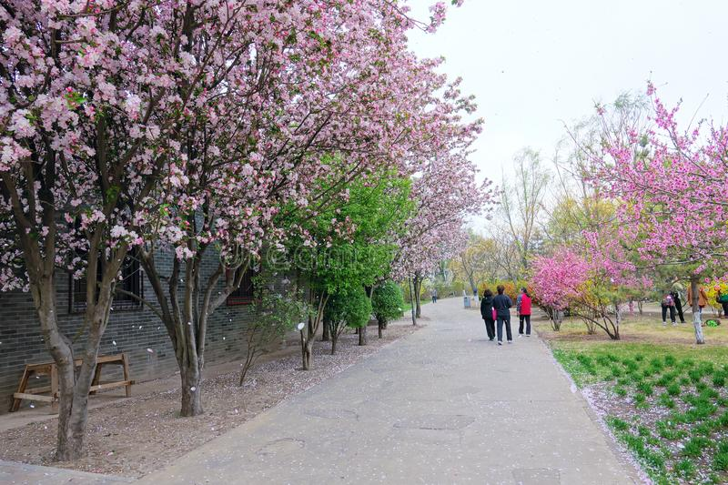 Spring park. The spring of Fenhe Park in Taiyuan, Shanxi, China stock photo