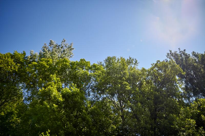 Spring Park with green trees. Beautiful natural landscape stock photography