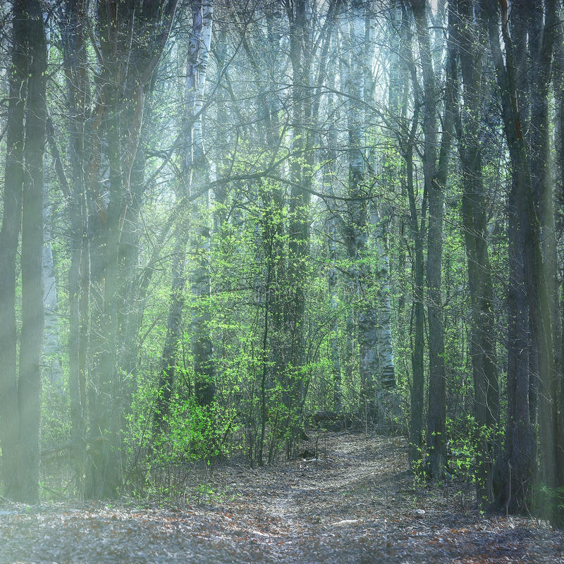 Spring park with mist royalty free stock photos