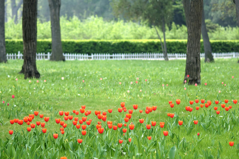 Spring park. The scenery of spring park stock image