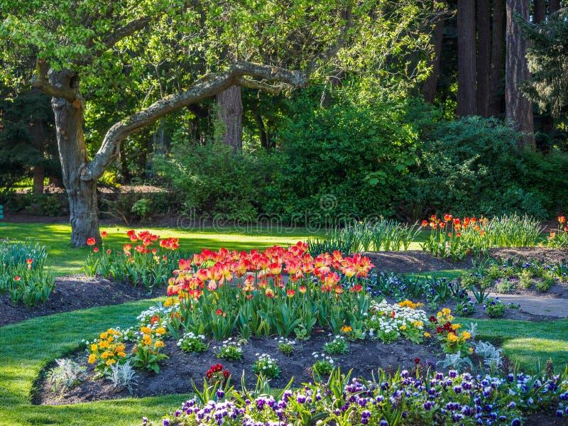 Spring park stock photos