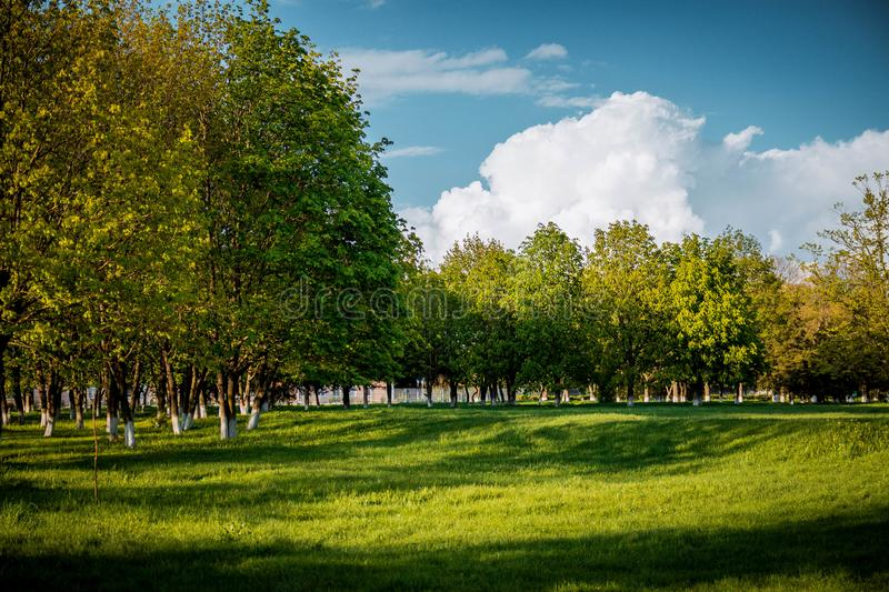 Spring park for walks. Russian nature the spring. Kuban landscape and park. Unusual nature. Beautiful background. Yellow Willow trees royalty free stock photography