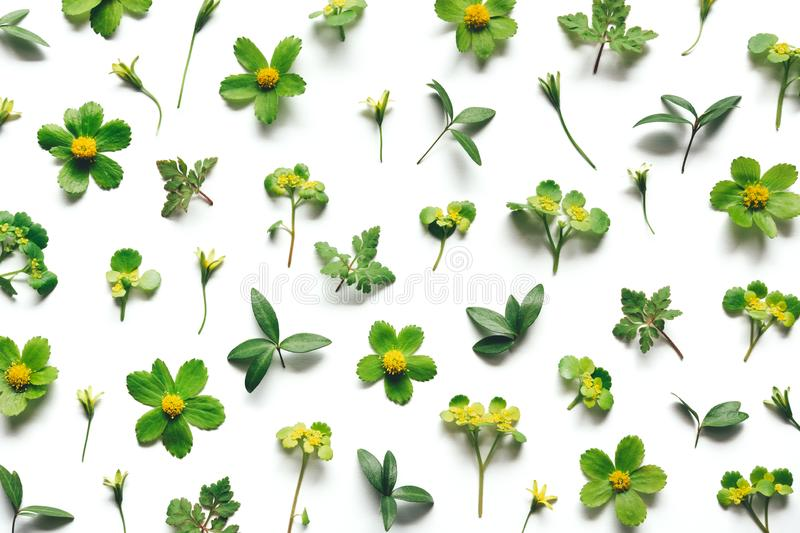 Spring Pattern Made Of Green Plants stock image