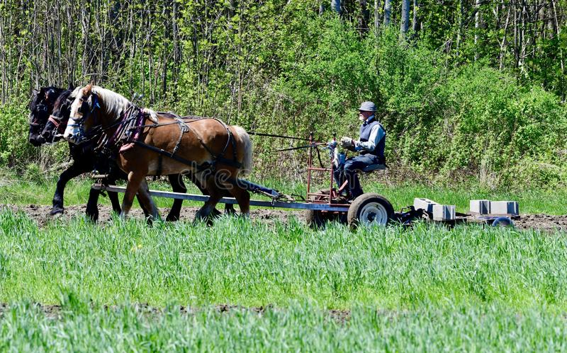 Amish Farmer in Maine. This is a Spring picture of an Amish Farmer plowing his field with a team of three horses, located in Cambridge, Maine. This picture was royalty free stock images