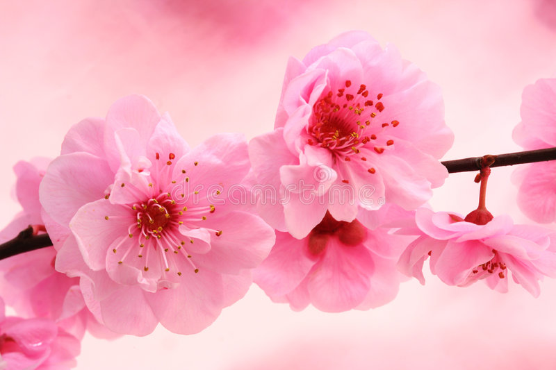Spring in pink stock photos