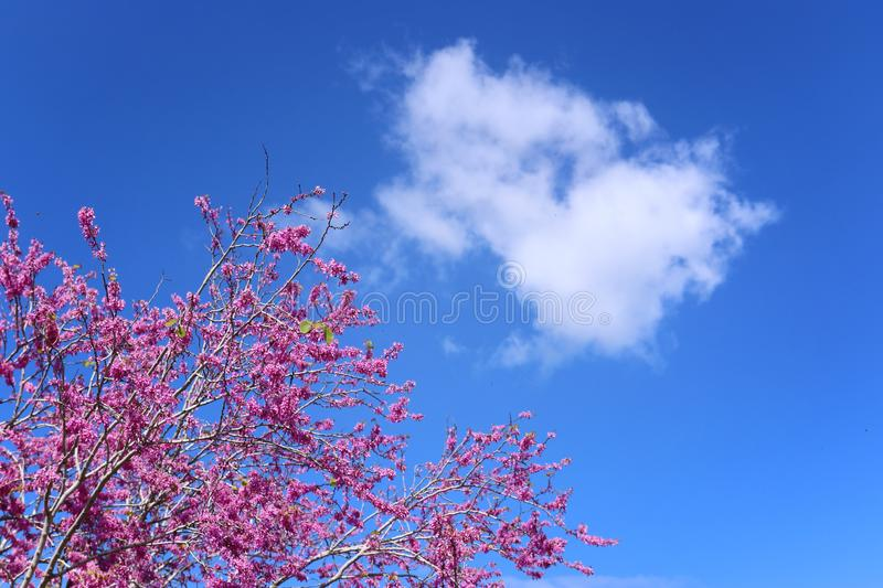 Spring pink blossoms tree. selective focus photo.  stock photography