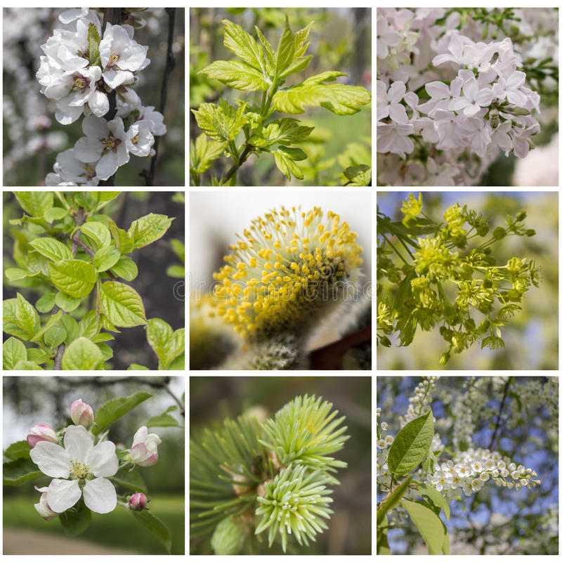 Spring plant collage. Square collage of 9 moments of spring stock photography