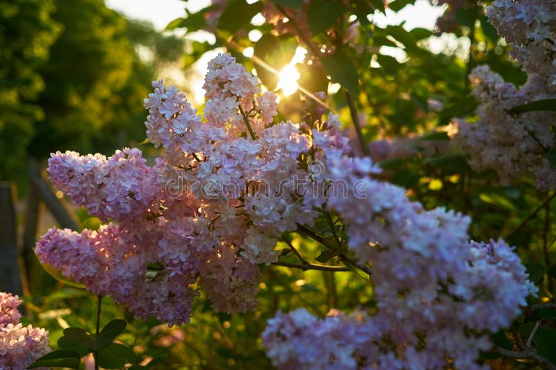 Spring, Plant, Tree, Flower stock photography