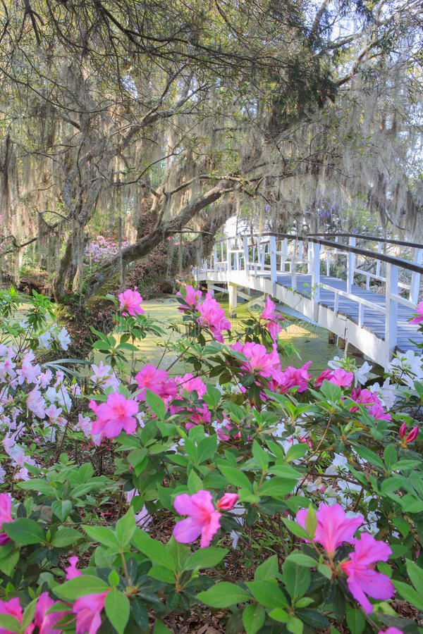 Spring Plantation Garden South Carolina. Southern plantation garden in spring bloom with live oak tree and hanging moss adjacent to white wooden ornamental stock image