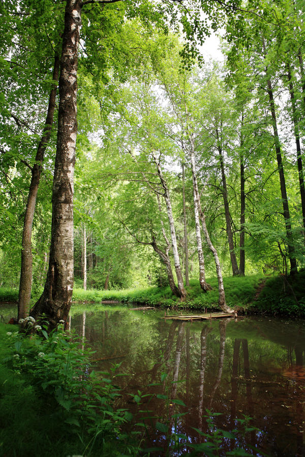 Spring pond in forest. Spring pond in green deciduous wood royalty free stock photos
