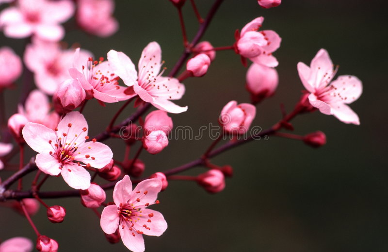 Download Spring portraits stock photo. Image of plant, budding - 2243878