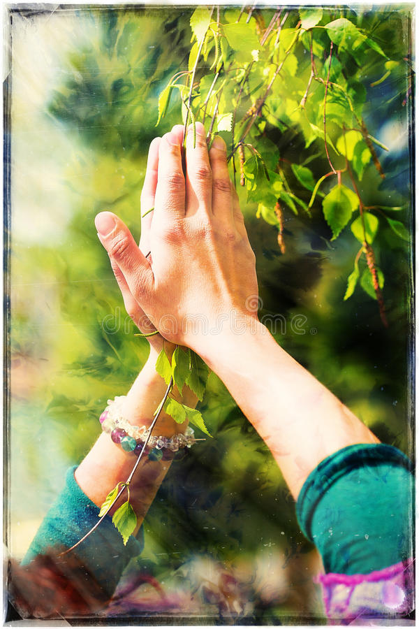 Spring prayer – adoring the healing powers of the spring. Tree in hands, with color pattern.  royalty free stock photography